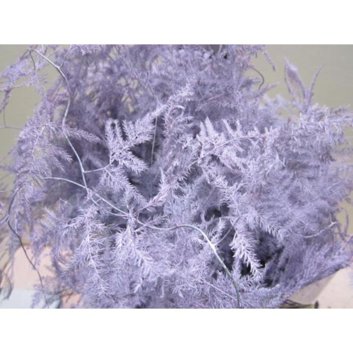 <h4>Asp Extra Veer Lavendel</h4>