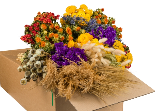 <h4>DRIED FLOWERS MIX IN BOX ORANGE</h4>