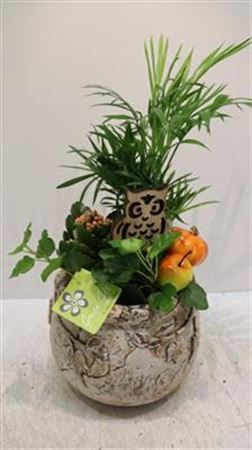 <h4>2242 Ker Or Leaf Pot!!</h4>