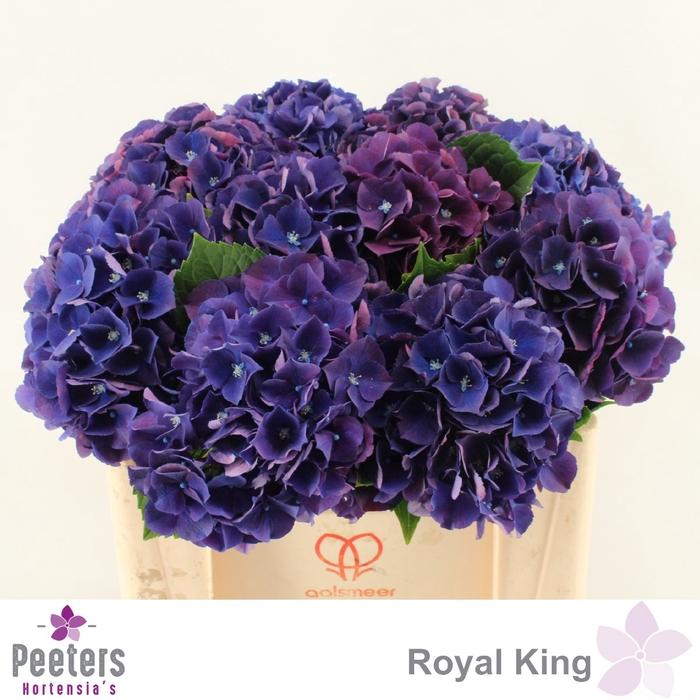 <h4>HYDR M ROYAL KING</h4>