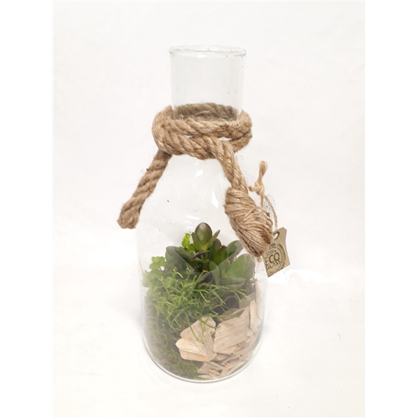 <h4>804 NAT Mini succulent mix in fles14/33 +driftwood</h4>