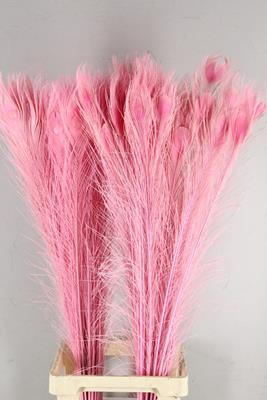 <h4>Feather Peacock L.pink  110cm</h4>
