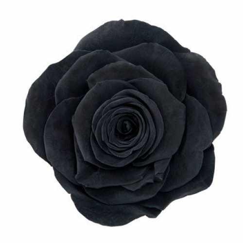Rose Monalisa Black