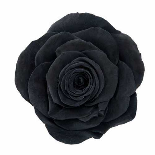 <h4>Rose Ava Black</h4>