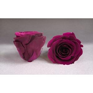 Rose stab. L Pin-05