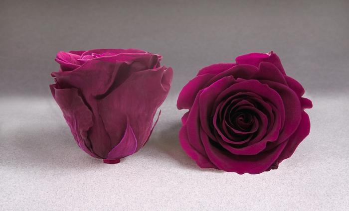 <h4>Rose stab. L Pin-05</h4>