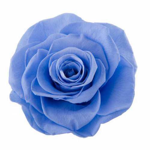 Rose Ines Marine Blue