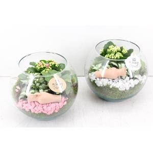 arr. PL - Glas bol - roze/wit