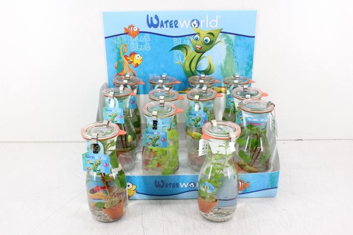 <h4>arr. WW - Glas bottle M 1 blub</h4>