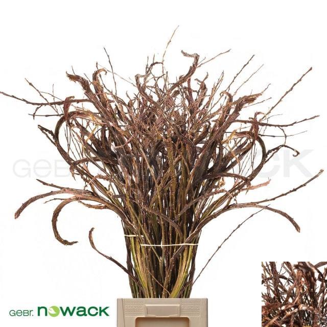 <h4>Salix Sekka Bandwilg</h4>