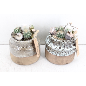 arr. MB Cactus - Candy pot M