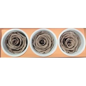 Rose Monalisa Sand beige