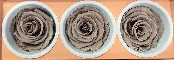 <h4>Rose Monalisa Sand beige</h4>