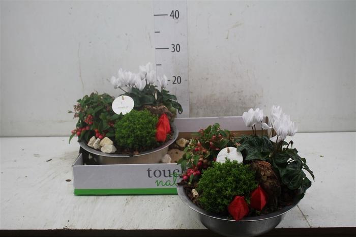 <h4>Arr Tuinplanten In Schaal</h4>