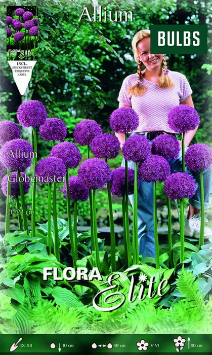 <h4>Z Allium Globemaster</h4>