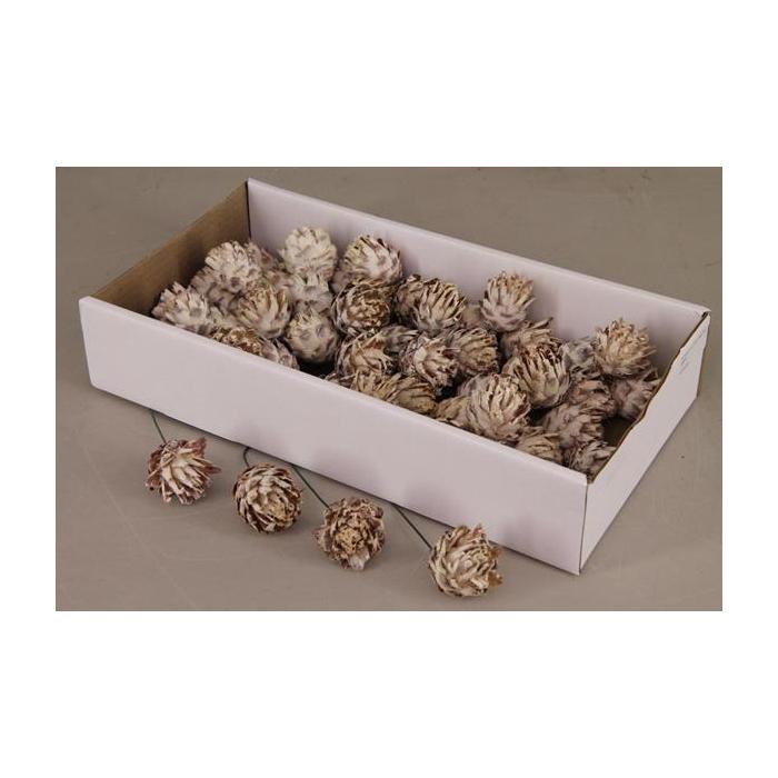 <h4>Plumosum 10cm Wire Box(55p)</h4>