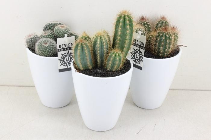 <h4>arr.. Cactus UB0938 - Ker. vaas wit</h4>