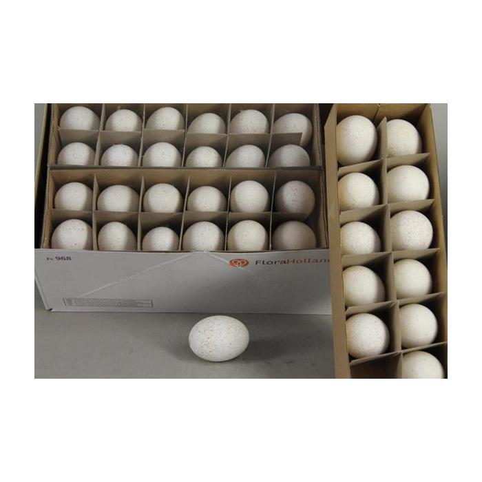 <h4>Egg Turkey Natural Box(12pcs)</h4>