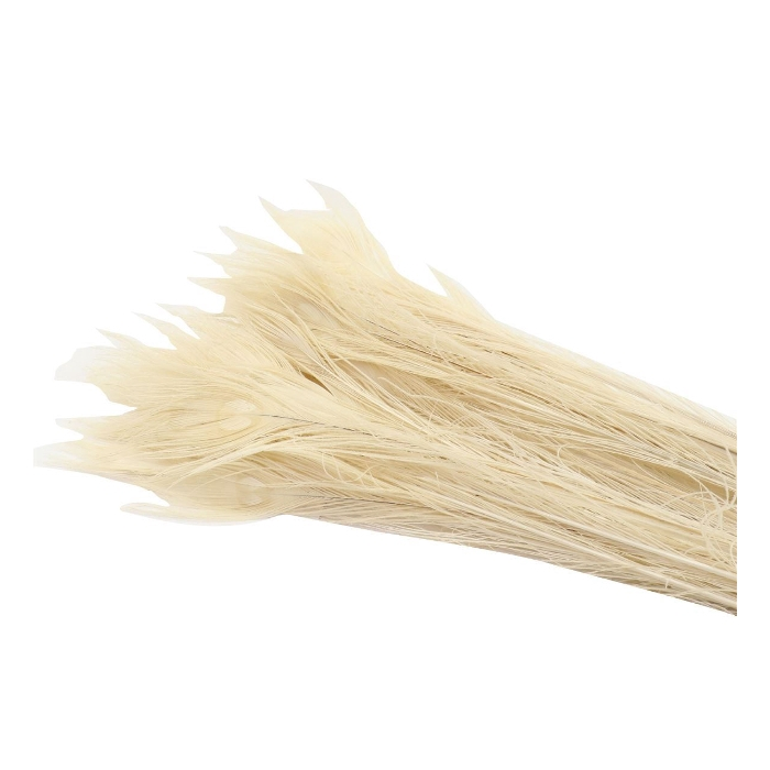 <h4>DRIED FLOWERS - FEATHER PEACOCK BLEACHED WHITE 90cm</h4>