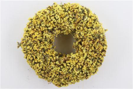 <h4>Wr Yellow Sensation 35cm</h4>