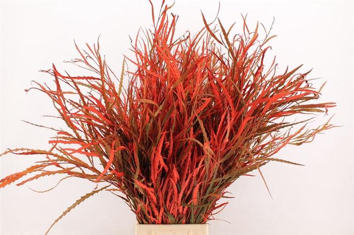 <h4>Grevilea Red</h4>