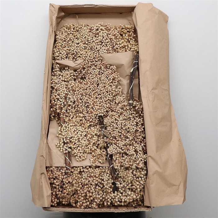 <h4>Dried Pepper Berries White P Bunch</h4>