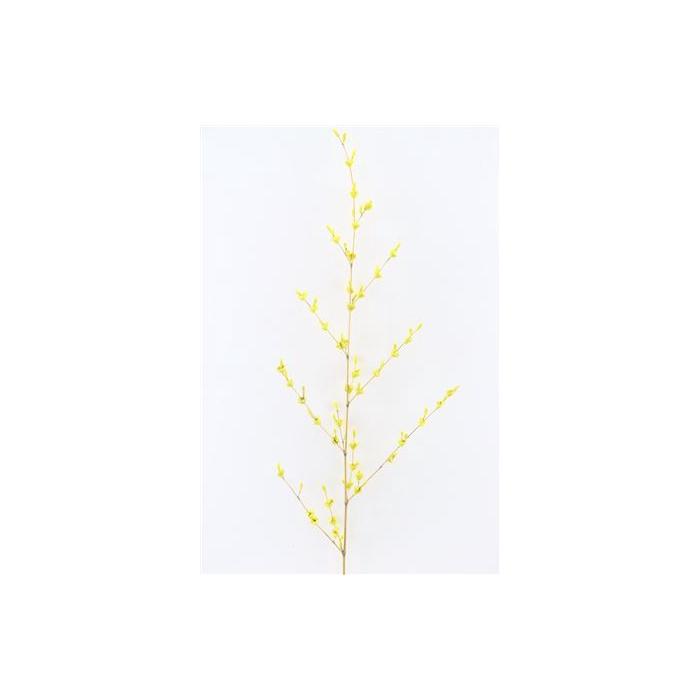 <h4>Dried Flour Flowers Yellow P. Stem</h4>