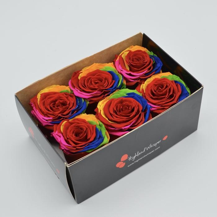 <h4>R PR Rainbow</h4>