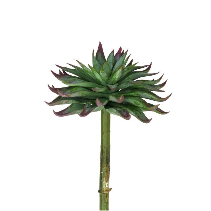<h4>Silk Echeveria d13*17cm</h4>