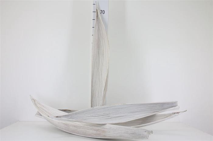 <h4>Maripa White Antique</h4>