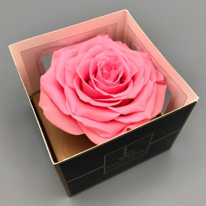 <h4>R PR XXL Lulu Baby Pink</h4>