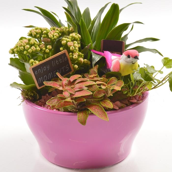 <h4>Planten  ..in schaal L%</h4>
