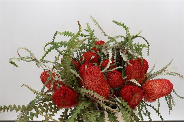 <h4>DRIED BANKSIA SPECIOSA RED</h4>