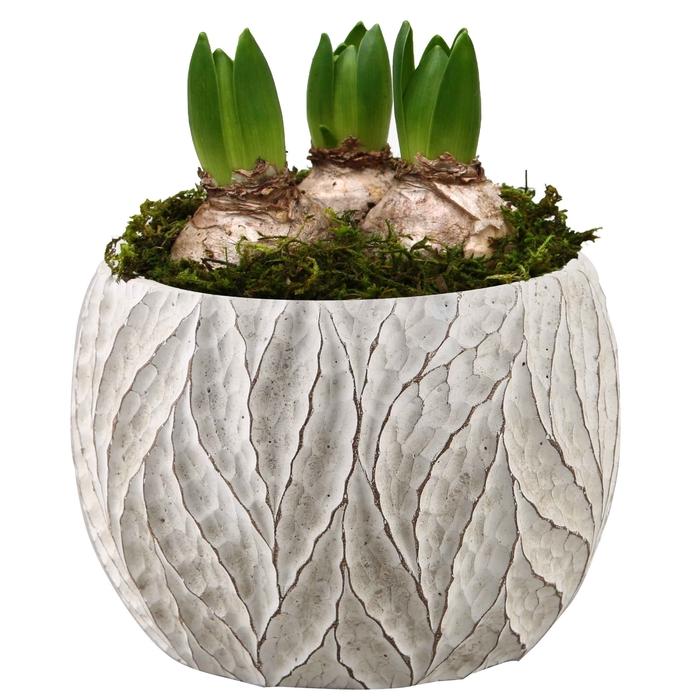 <h4>Arrangement Hyacint Pot Gabriëlle met sneeuw</h4>