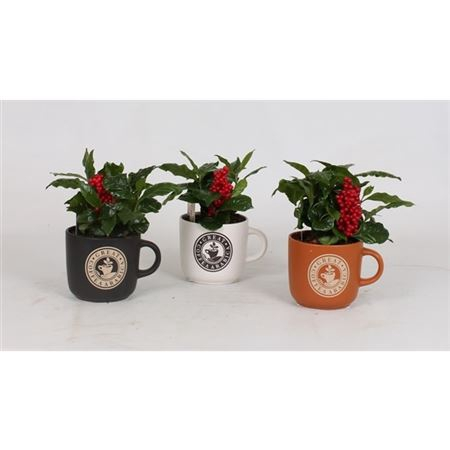 <h4>Coffea Arabica Keramiek Koffiemok + Steker</h4>
