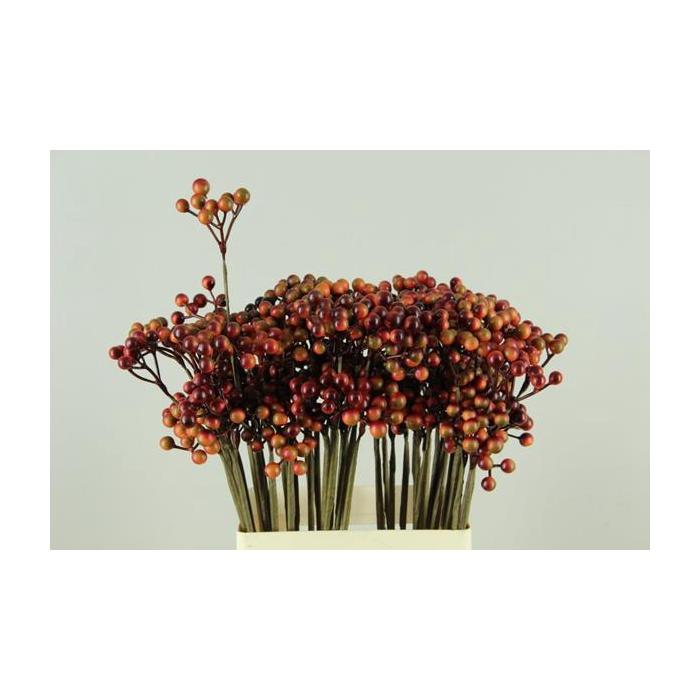 <h4>Stick Berries Orange/red</h4>