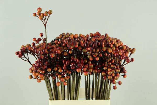 <h4>Stick Berries Orange/red</h4>
