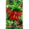 Z Fritillaria Rubra