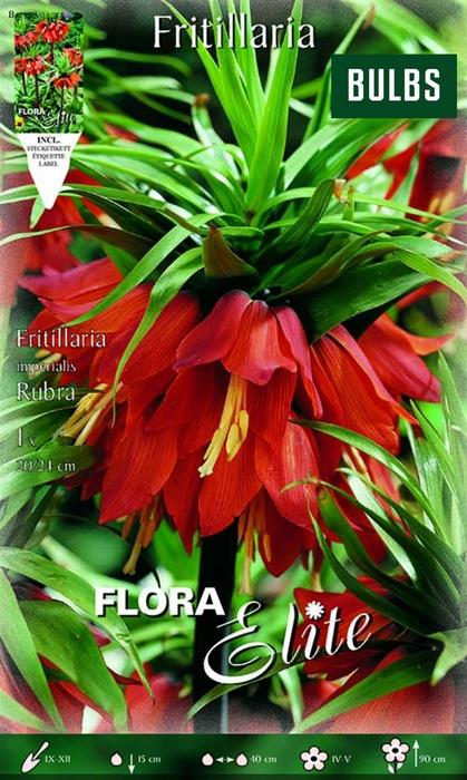 <h4>Z Fritillaria Rubra</h4>
