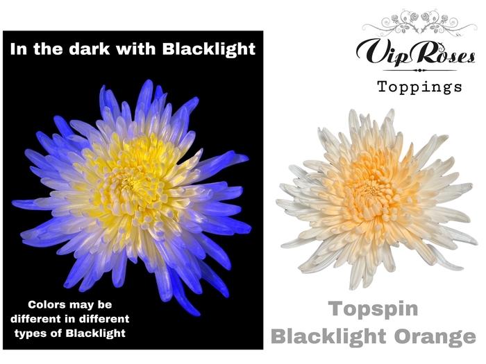 <h4>CHR G TOPSPIN BLACKLIGHT ORANGE</h4>