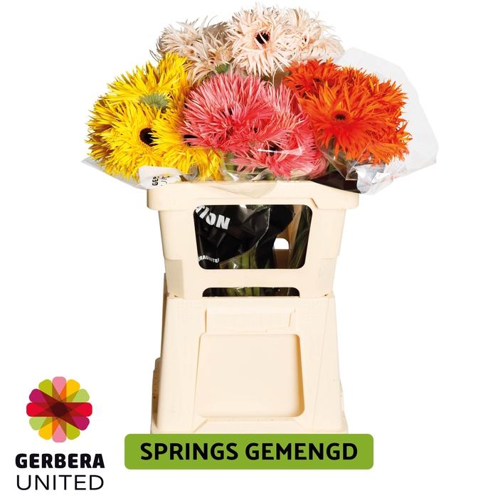 <h4>GE GR Spring mix water</h4>