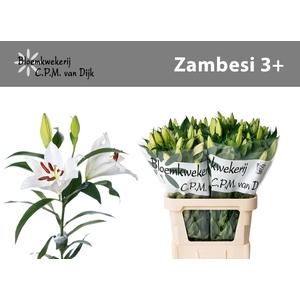 LI OT ZAMBESI