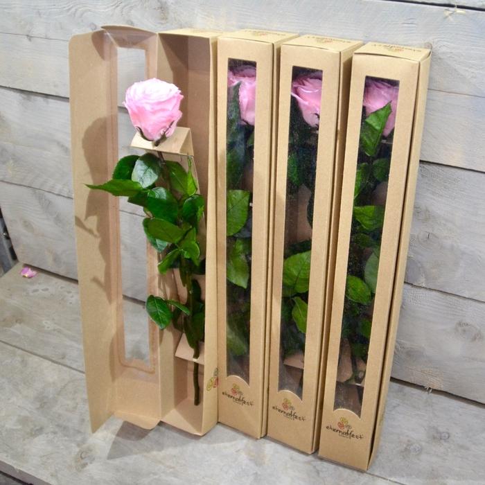<h4>R PR Stem Amor Pink</h4>