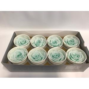 Rose Super Mint Green