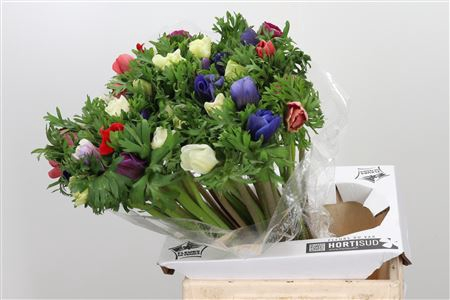 <h4>Anemone Mar Mixed</h4>