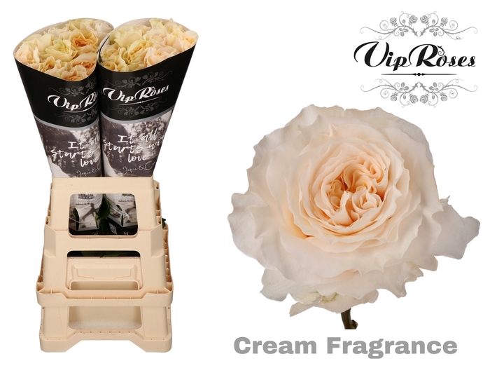 R GR CREAM FRAGRANC+ x 20