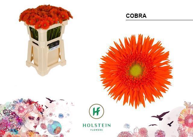 <h4>GE MS GERSP COBRA</h4>
