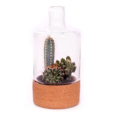 <h4>Beplante Glazen Stolp Met Kurk En 3x Cactus 5,5 Cm</h4>