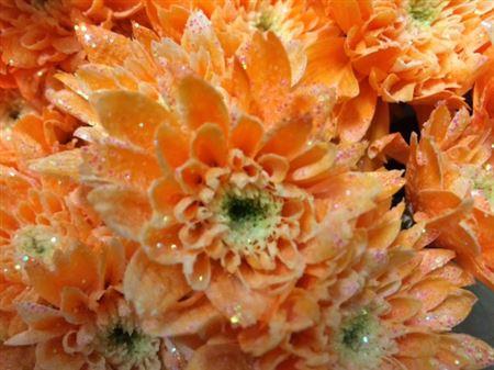 <h4>Chr T Euro Apricot + Glit</h4>
