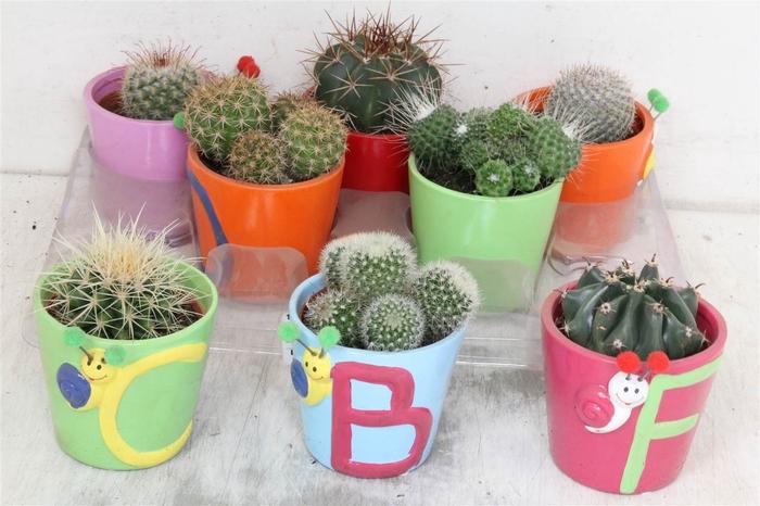 <h4>Cactus Ov Sierpot #</h4>
